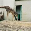 11budapest zoo.jpg