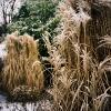 PuB_winter_web001